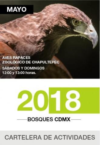 Cartelera Bosques CDMX