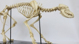 Ponte Almeja con la pieza de noviembre en el Museo de Historia Natural