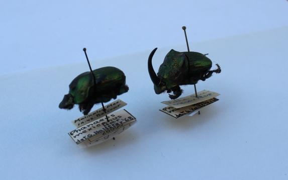 escarabajos5.jpg