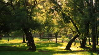 Buscan guardianes para proteger el Bosque de Chapultepec