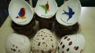 Acércate a las actividades de verano en el Museo de Historia Natural