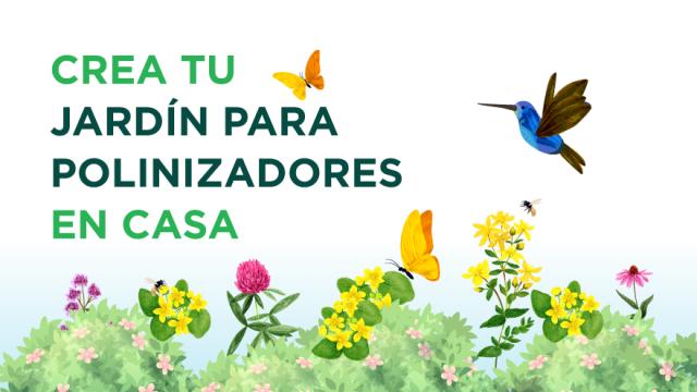 ¿Te gustaría tener un jardín lleno de mariposas? 🌷 (video)